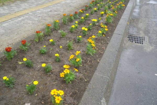 北見市中心部の花壇清掃と植栽の地域貢献活動を実施